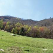 Big Cove Ridge
