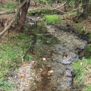 Brush Creek Headwaters