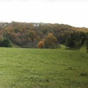 Doughton Park Buffer
