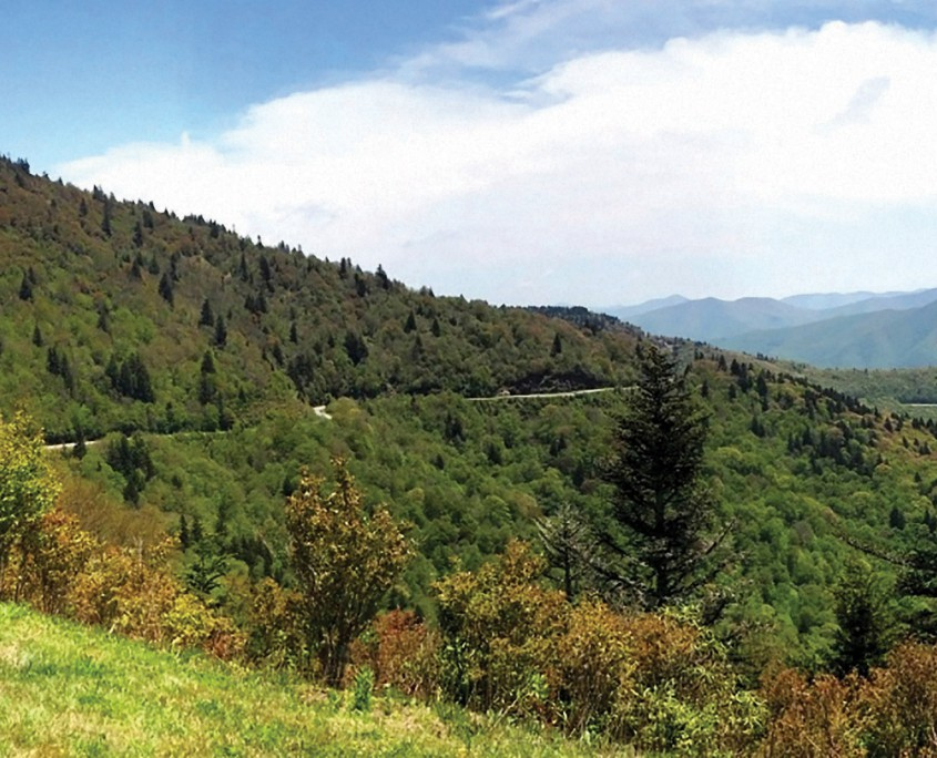 Fork Ridge Overlook