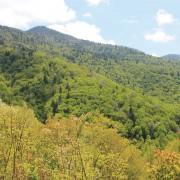 Hornbuckle Valley Overlook