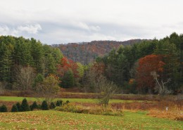 Laurel Springs/Little Grandfather Mountain